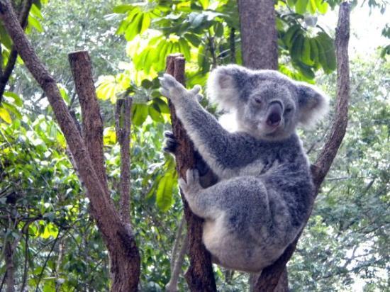 lone pine koala sanctuary review
